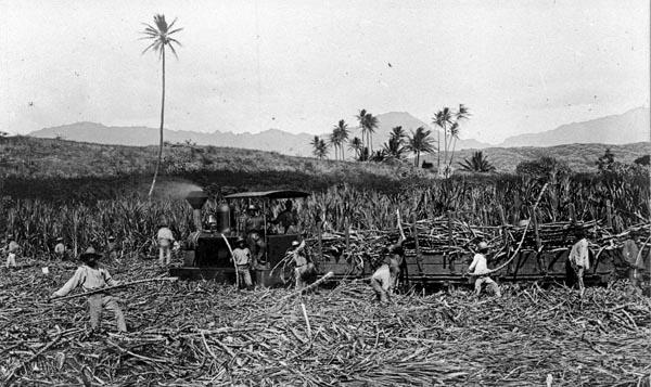 Sugar Mill History.jpg
