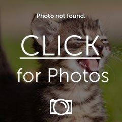 image_zpssleaxb1o.jpg