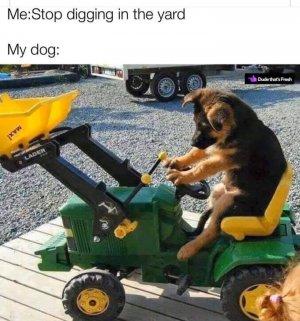 digging shepherd.jpg